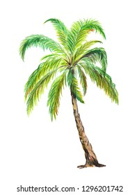 Palm tree.  one palm tree design element. Watercolor  hand drawn illustrations isolated on a white background