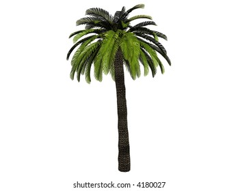 a palm tree, rendered with Bryce 6