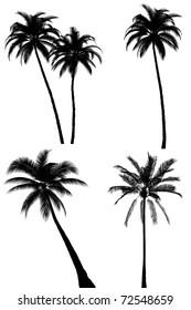 Palm tree silhouette set on white background