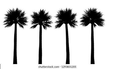 Palm Tree Silhouettte