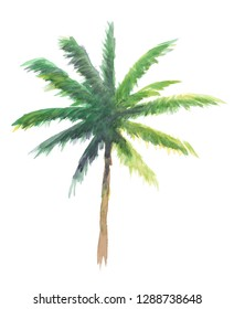 palm tree watercolor illustration, isolated nature on white background