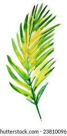Palm tree watercolor original painting.