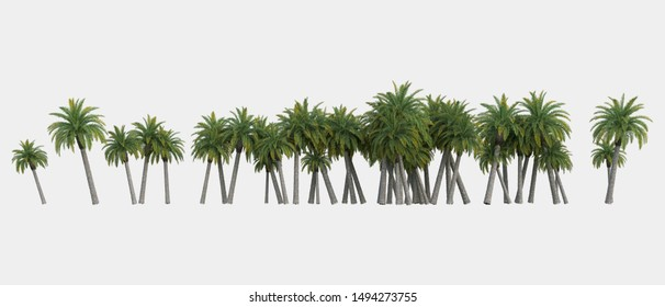 Palm trees isolated. Image useful for banners, posters or photo manipulations. 3d rendering. Illustration