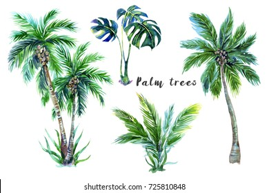 Palm trees, tropical leaves, jungle monstera leaf plant set isolated on white background. Tropical watercolor botanical illustrations, natural floral elements