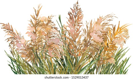 Pampas Grass Wreath Frame Watercolor Hand Draw Isolated on White Background