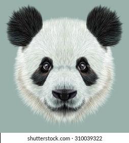 Panda animal cute face. Illustrated Asian bear head portrait. Realistic fur portrait of bamboo animal on blue background.