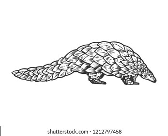 Pangolin animal engraving raster illustration. Scratch board style imitation. Black and white hand drawn image.