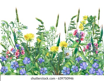 Panoramic view of  wild meadow flowers and grass, isolated on white background. Horizontal border with field flowers and herbs.  Watercolor hand drawn painting illustration.