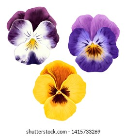 Pansies Colorful flowers realistic illustration