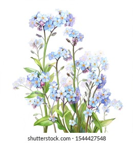 Pansies are depicted on a white background. Drawn in watercolor.