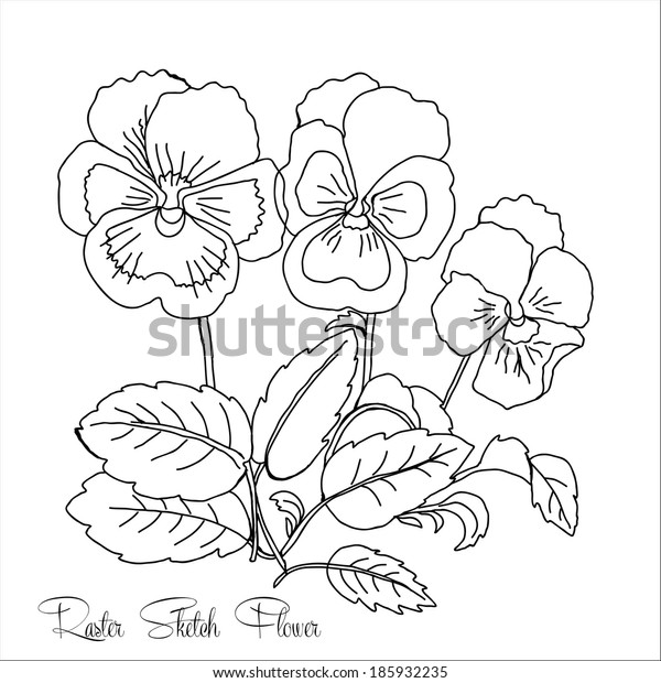 Pansy.Sketch Black and White.Raster  illustration