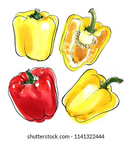 Paprika. Sweet yellow peppers painted with watercolor on a white background. A colored sketch of vegetables with mascara and paint. Farm products.