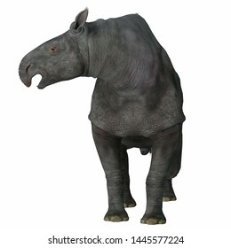 Paraceratherium Mammal on White 3D illustration - Paraceratherium was a herbivorous mammal that lived in Eurasia during the Eocene and Oligocene Periods.