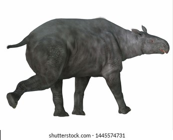 Paraceratherium Mammal Tail 3D illustration - Paraceratherium was a herbivorous mammal that lived in Eurasia during the Eocene and Oligocene Periods.