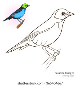 Paradise Tanager Bird Learn Birds Educational Game Coloring Book Raster Illustration