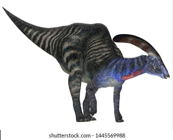 Parasaurolophus Dinosaur 3D illustration - Parasaurolophus with a cranial crest was a herbivorous Hadrosaur dinosaur that lived in North America during the Cretaceous Period.
