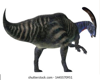 Parasaurolophus Dinosaur Tail 3D illustration - Parasaurolophus with a cranial crest was a herbivorous Hadrosaur dinosaur that lived in North America during the Cretaceous Period.