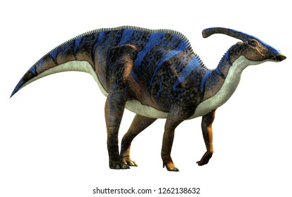A parasaurolophus, a type of herbivorous ornithopod dinosaur of the hadrosaur family in profile on a white background.  This one is brown with blue stripes. 3D Rendering.