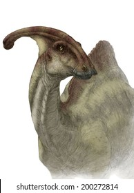 Parasaurolophus walkeri head portrait - white (no background)
