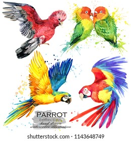 Parrot bird hand drawn watercolor illustration set