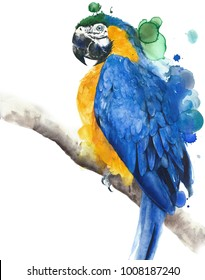 Parrot macaw blue and yellow colors watercolor painting illustration isolated on white background