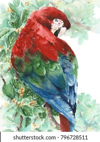 Parrot macaw red green blue bird sitting on the tree watercolor painting illustration isolated on white background