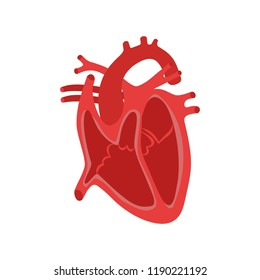 Part of the human heart. Anatomy. Diastole and systole.Filling and pumping of Human Heart structure anatomy anatomical diagram. bitmap