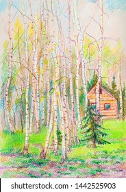 pastel picture, spring  landscape with  high birches and spruces