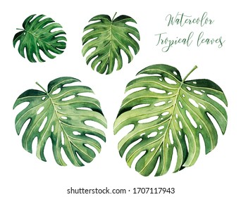 Pattern with beautiful watercolor tropical leaves. Tropics. Realistic tropical leaves.  Isolated on white background.