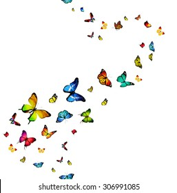 Pattern with flying butterflies
