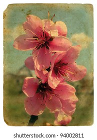 peach blossom. Old postcard, design in grunge and retro style