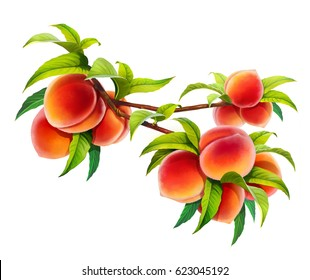 Peach branch isolated on white