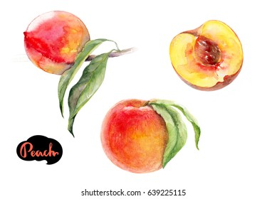 Peach watercolor illustration. Peach fruit branch with leaves, peach fruit cut isolated on white background.