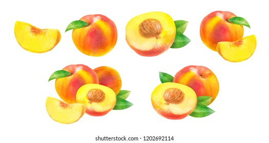 peaches \ nectarines, watercolor hand-drawn drawing of a fruits, isolated illustration on a white background