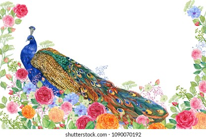 Peacock and rose flowers.watercolor illustration
