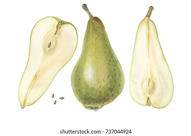 Pears set. Illustration in watercolor. Hand painted illustration isolated on white.