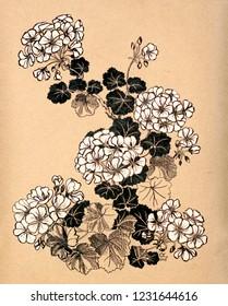 Pelargonium, geranium home flower composition.  Hand drawn line-art artistic background.  Sketch organic flowers drawing template.  House plants poster.   Vintage paper nature artwork.
