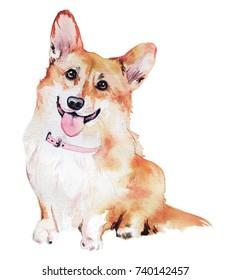 Pembroke Welsh Corgi Dog illustration in watercolor