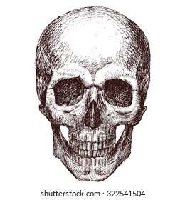 Pen drawing human skull, human head, isolated object
