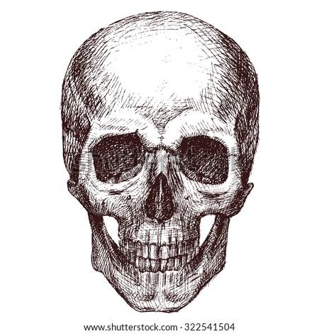 pen drawing human skull human head stock illustration 322541504