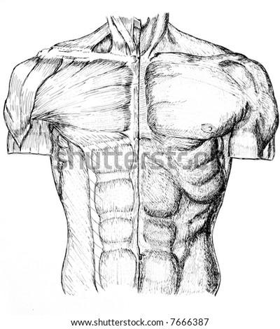 pen ink anatomical drawing back man stock illustration 7666387