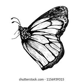 pencil color butterfly , isolated on white background.