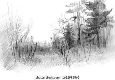 Pencil drawing of an edge of a northern wood