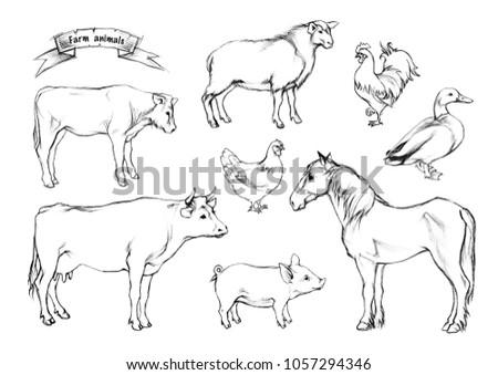 Image of: Chicken Pencil Drawing Shutterstock Pencil Drawing Farm Animals Stock Illustration 1057294346 Shutterstock