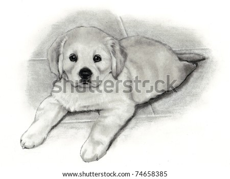 pencil drawing golden retriever puppy stock illustration 74658385