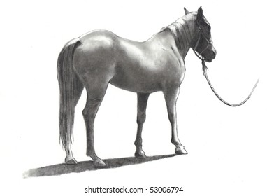 Pencil Drawing of Horse From Back and Side