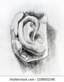 Pencil drawing of man's ear. Art student learning the disciple, class work, training.