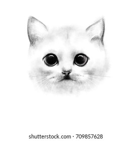Pencil drawing portrait of a white cat, with large eyes and a short nose breed Scottish. Closeup on a white background