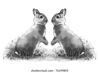 Pencil Drawing of Two Cute Bunnies Face to Face