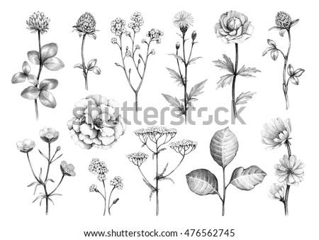 pencil drawings wild flowers stock illustration 476562745 shutterstock